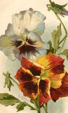 Pansies by Catherine Klein Catherine Klein, Botanical Illustration, Botanical Prints, Vintage Diy, Floral Illustrations, Flower Pictures, Gravure, Vintage Flowers, Pansies