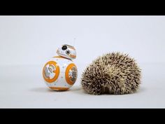 BB-8 and the Spiky Friend - YouTube