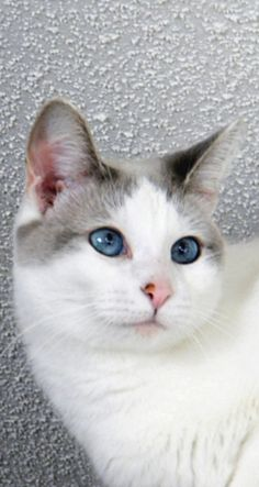 E Pluribus Meow: In Cats We Trust   ღ♥Please feel free to repin ♥ღ www.catsandme.com