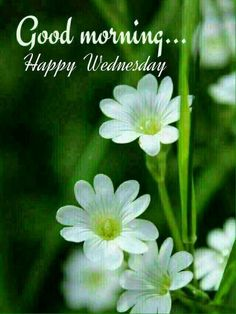 Wednesday Greetings, Wednesday Wishes, Good Morning Thursday, Good Morning Wednesday, Good Morning Msg, Good Morning Texts, Morning Morning, Good Morning Picture, Good Morning Flowers