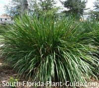 Native Plant Landscaping for South Florida - Collection 2