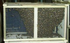 Package Bees http://hillsidebees.com