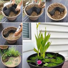 Easy Aquatic planter pond
