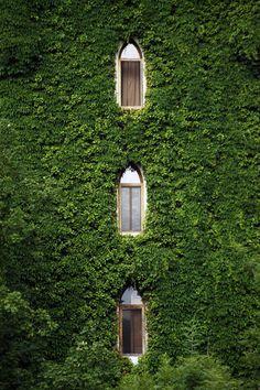 green-windows-4550