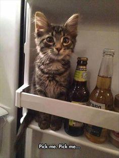 Awwwwwwwwwwwwwwwwwwwwwwwwwwwwwwwwwwwwwwwwwwwwwwwwwwwwwwwwwwwwwwwwwwwwwwwwwwwwwwwwwwwwwwwwwwwwwwwwwwwwwwwwwwwwwwwwwwww...How that kitty is cuteeeeee!!!!!!