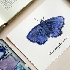 My watercolor INKtober butterfly and bugs illustrations are now available as prints and original artworks!🙂