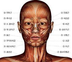 얼굴 근육 알아보기 : 네이버 카페