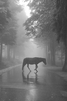 Lonely horse at Gerês