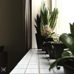 Heidi Risku | SOMETHING green