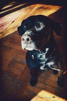 Black lab, my granddog, I love him so much.  Nan-Na