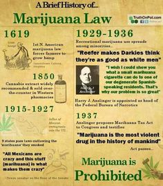 "this infographic misses a few key facts; such as the oil companies rebellion against hemp and the use of the term ""marihuana"" to trick congress - they didn't know it was the same as cannabis and hemp. Medical Cannabis, Cannabis Oil, Cannabis Edibles, Cannabis Growing, Marijuana Facts, Weed Facts, Marijuana Recipes, Endocannabinoid System, Smoking Weed"