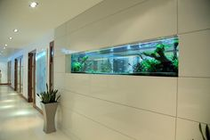 Rolling in the Deep: Underwater Worlds for High End Homes