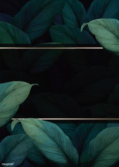 Green tropical leaves patterned poster vector | premium image by rawpixel.com / eyeeyeview Tropical Background, Flower Background Wallpaper, Leaf Background, Flower Backgrounds, Background Patterns, Wallpaper Backgrounds, Backdrop Background, Fond Design, Web Design