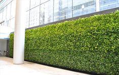 Green wall 4 | ftr.ct.lb*