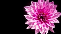 Image result for yellow flowers with black background