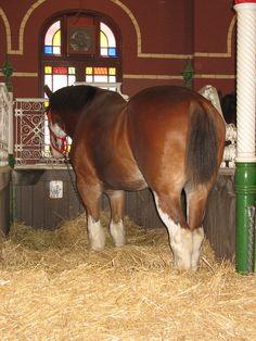 Anheuser-Busch Horse Barn, St. Louis