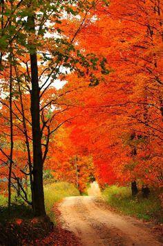 West Virginia Fall Country Road  #orange leaf maple tree