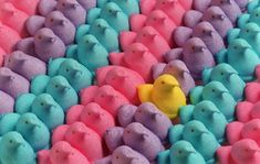 Marshmallow Chicks are a delicious homemade version of Marshmallow Peeps! Learn how to make Marshmallow Peeps at home this Easter. Easter Fun Facts, Easter Games, Easter Peeps, Easter Candy, Hoppy Easter, Peeps Candy, Easter Food, Easter Dinner, Easter Recipes
