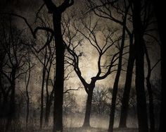 Into The Trees, Black and White Fine Art Photography, Eerie Night Time Grungy Forest Print, Spooky GOTH Photo, Back lit Tree Silhouette