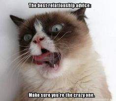 Relationship advice from Grumpy Cat.