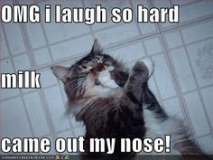 Top 30 most funniest and humorous animal pictures