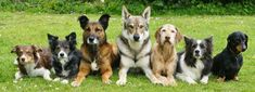 Club Site of the Day! your dog to be more sociable. & puppy training classes: www. Dog Training Methods, Basic Dog Training, Dog Training Classes, Dog Training Techniques, Potty Training, Training Courses, Mites On Dogs, Dog Clicker Training, Dog Behavior