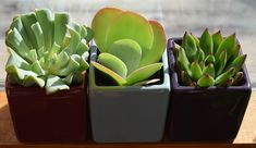 A Look At These Easy Container Gardening Tips! Take A Look At These Easy Container Gardening Tips! - Useful Gardening IdeasTake A Look At These Easy Container Gardening Tips! - Useful Gardening Ideas Purple Succulents, Hanging Succulents, Growing Succulents, Small Succulents, Succulents Garden, Hanging Planters, Indoor Succulents, Container Plants, Container Gardening
