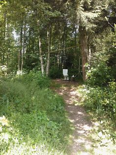 Auch im Wald muss alles seine Ordnung haben!? by mprofi-ag, via Flickr Explore, Digital, Plants, Forests, Photo Illustration, Exploring, Planters, Plant, Planting
