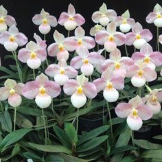 Some Sentences, Orchidaceae, Landscaping Company, Show Me Your, Great Pictures, Houseplants, Indoor Plants, Editor, Orchids