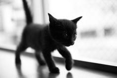 Bear looked like this when he was a kitten!!!
