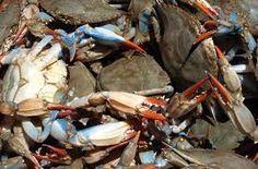 Resultado de imagen de deep sea crustaceans