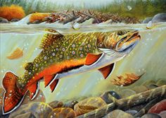 Stamp design - Brook Trout by Richard Goodkind