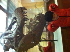 자연사 박물관에서 티라노를 만났다  난 내 아들이  공룡박사가 되길 원하지는 않는다  다만 상상력에 도움이 되길 바랄뿐