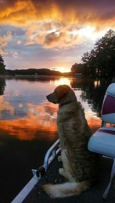 dog on a boat at sunset