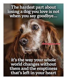 Free Dog Quotes Love Loyalty compassion paw prints a voice All Dogs, I Love Dogs, Miss My Dog, Pet Loss Grief, Dog Poems, Dog Quotes Love, Pet Remembrance, Dog Heaven, Dog Memorial