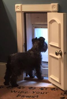 When puppies are expected I'll announce on my site. As an extra bonus, it's a lot simpler to teach a Schnauzer puppy not to bite, in place of an older Schnauzer Diy Pet, Niches, Dog Rooms, Kids Rooms, My New Room, Dog Life, My Dream Home, Pet Care, Fur Babies