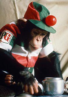 "PG Tips monkeys Catchphrase: ""Avez vous un cuppa? or ""Tea Mr. Shifter?"""