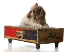 Pepsi crate dog bed - cute! (The dog's pretty adorable, too.)