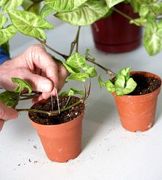 Here are all the tips you need to grow beautiful, healthy houseplants./