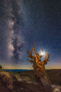 ~~Ancient Bristlecone Pinetree's Moon & Milky Way by Jerry Patterson~~