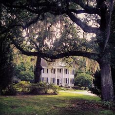 Columns and Spanish moss = perfection.