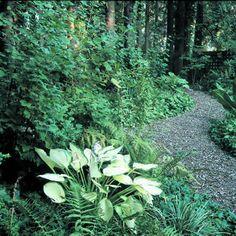 Woodland gardens on pinterest woodland garden ferns and for Woodland shade garden designs