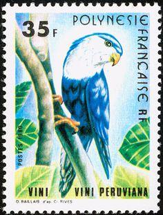 Polinesia Francesa 1980 - El Lorito Monjita,originaria de la Polinesia Francesa…