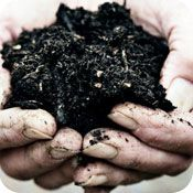 Beginner's Guide to Composting-need to set one up (perhaps after winter??)
