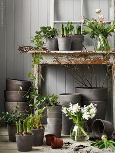 IKEA Sverige – Planteringstider
