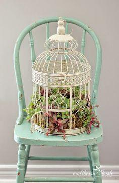 Gabbiette per uccelli e succulente