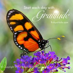 Start each day with gratitude. #grateful #butterfly