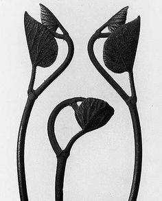 Image result for public domain karl blossfeldt