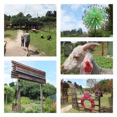 Timberlake Organic Village, Wilderness, South Africa | One Footprint On The World Port Elizabeth, Garden Route, Footprint, Wilderness, South Africa, Eco Friendly, Organic, Activities, Park