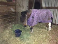 The $24,000 settlement comes after Clackamas County Deputy Matt Helmer shot Gir, a 30-year-old miniature horse, in February. The owners said the deputy mistook the horse's arthritis for severely injured limbs.